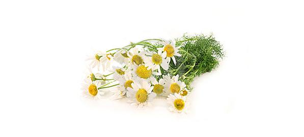 Plantele Medicinale