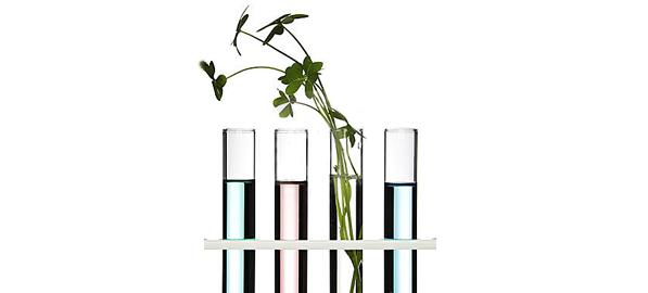 Plantele, un remediu pentru sanatatea noastra